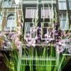 Photo 3: Gladiolen im Schaufenster, Amsterdam 2013 © Werner Mansholt
